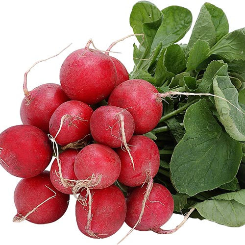 Radish – K D Davis and Sons The Greengrocers